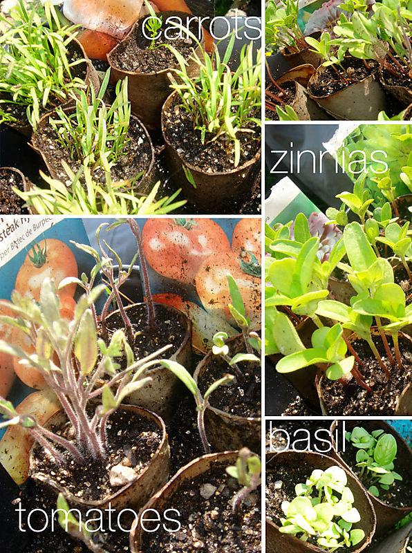 PlantsfromSeeds
