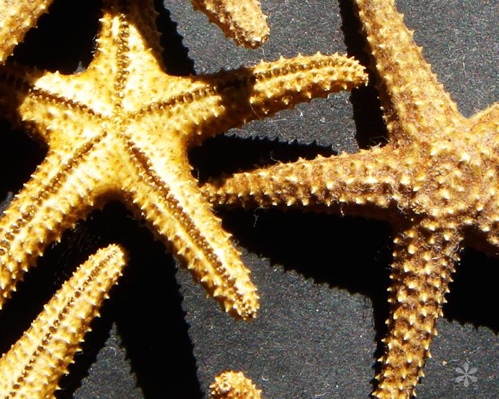 Ministarfish