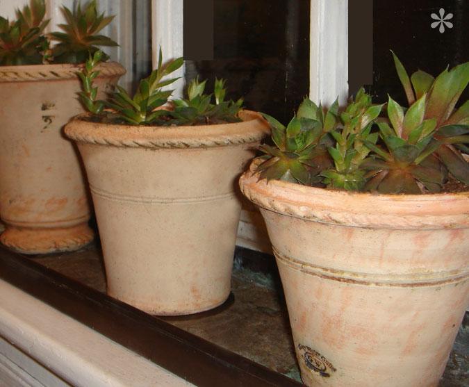 3potssucculent